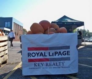 rlp pumpkin 9