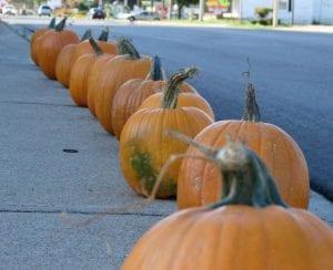 rlp pumpkin 2